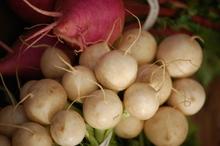 Turnips_006