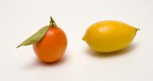 Mandarinquattavaris_lime
