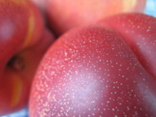Fm_stonefruit_very_closeup