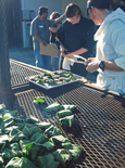 Brentwood_randy_fig_leaves_on_grill