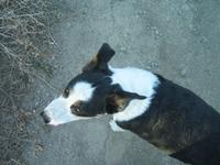 Farm_walks_with_dogs_aug_05_28
