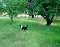 Farm_walks_with_dogs_aug_05_3