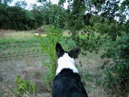 Farm_walks_with_dogs_aug_05_54