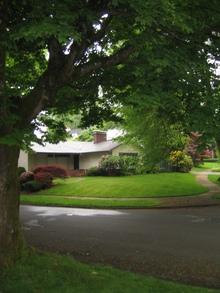 Portland_trees