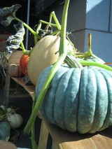 Stinson_beach_and_farmers_market_oct_05__2